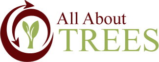Our Certfied Arborists in Springfield MO - All About Trees