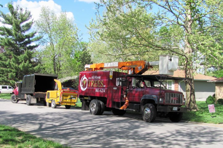 All About Trees Stump Grinding Springfield MO