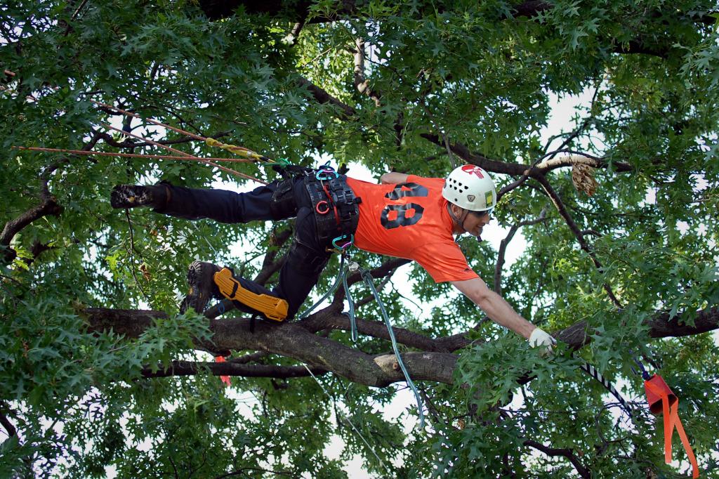 Noel Climbing In Tree