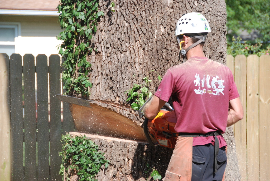 Chainsaw Tree Removal - All About Trees - Tree Felling Springfield MO