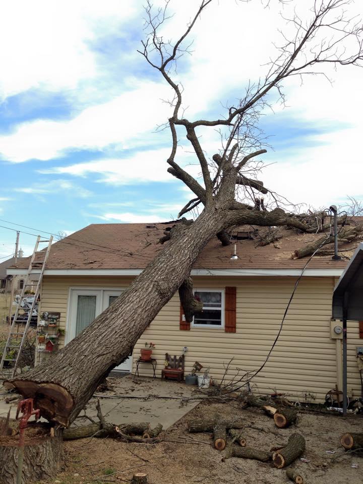 Hire A Reputable Tree Company Tree Stump Removal Springfield MO