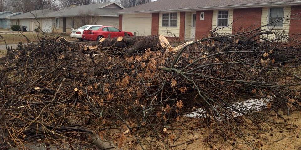 Hire An Honest Tree Company Tree Stump Removal Springfield MO