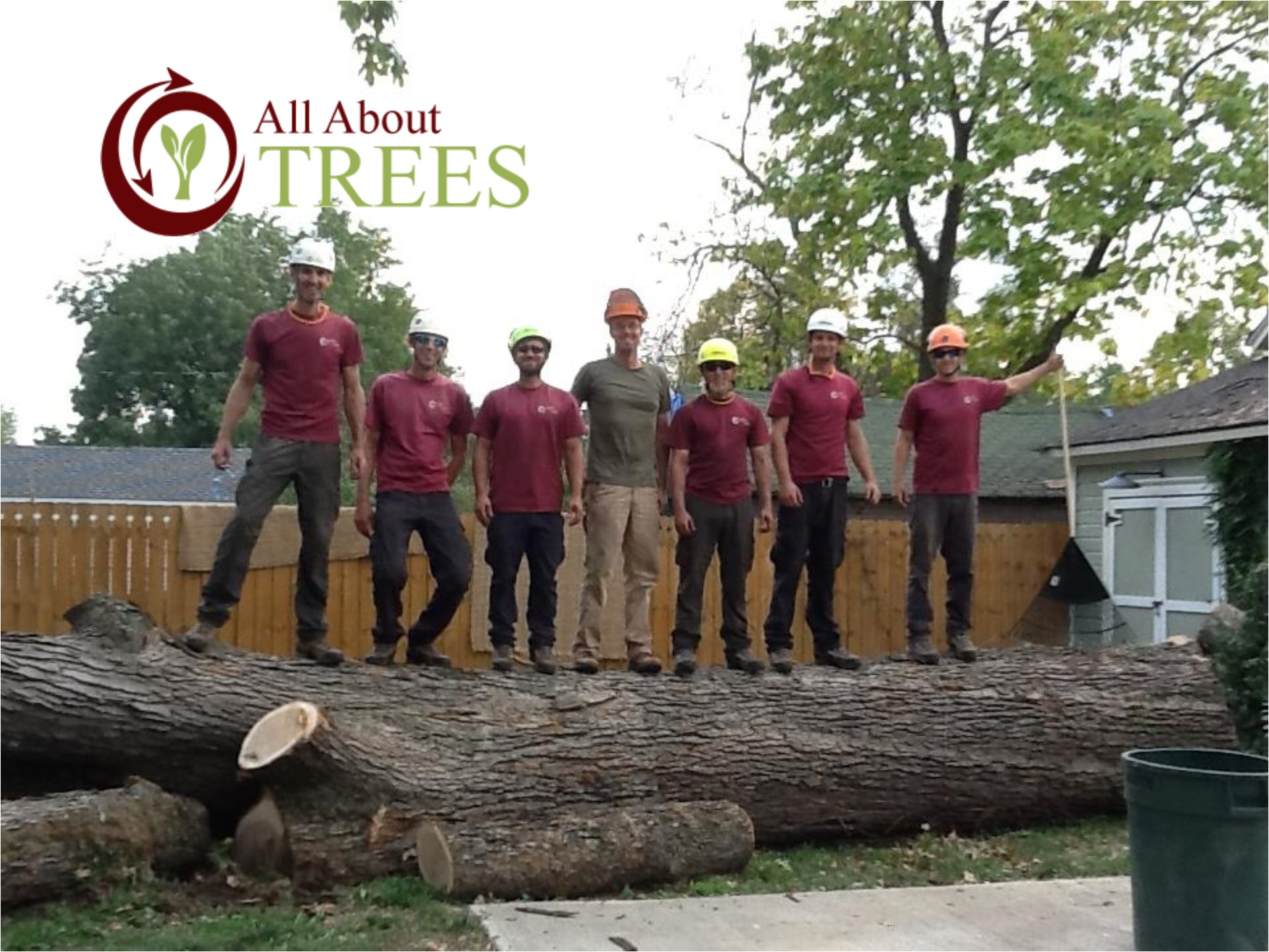 All About Trees Tree Service Experts In Springfield Mo