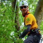 Certified Arborist Noel in a tree