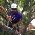 Certified Arborist Will in a tree