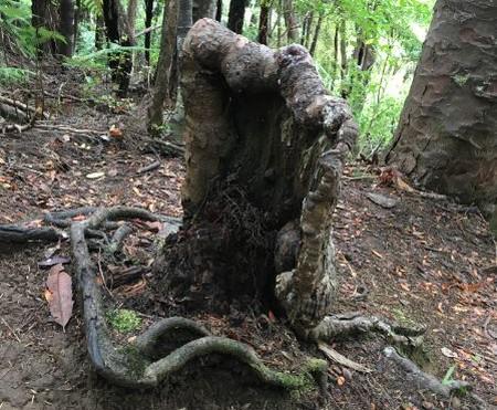 alive stumps